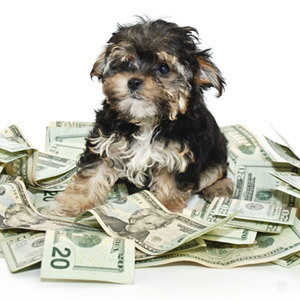 dog in money