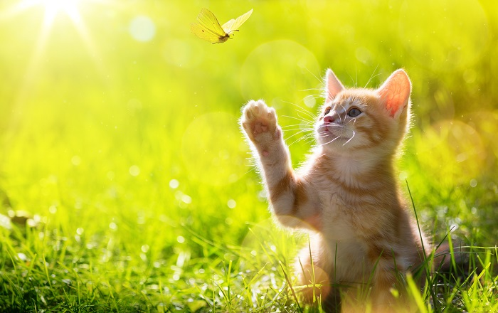 are your lawn care products harming your cat