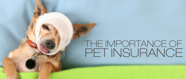 why is pet insurance important