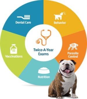 pet wellness coverage