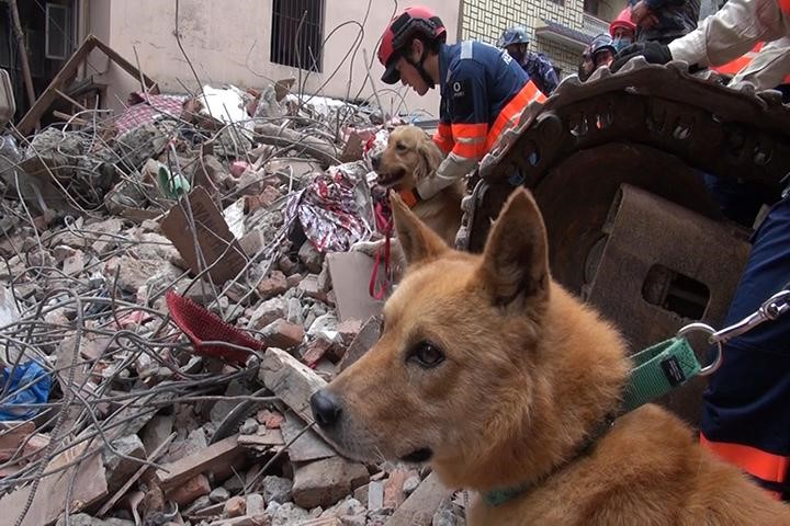 earthquake-dog-1